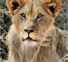 """Handsome boy"" - Tswalu - Kalahari by Sandy Beaton"