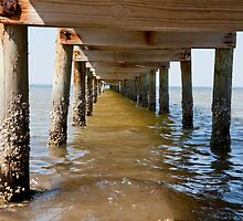 Barnacle Path by phil decocco