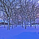 Wintry Avenue by cfjrosa