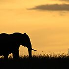 Mara Elephant at Sunset by Sue Earnshaw