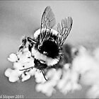 bee by Paul  Sloper