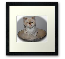 If looks could kill…. I could whoop a pitbull! Framed Print