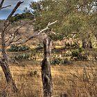 Roadside Cactus by Daniel Ray Thibodeaux
