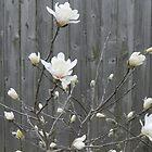 Pretty White Flowers  by Felicia722