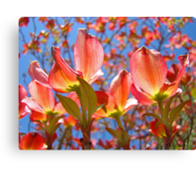 Bright Colorful Floral art Pink Dogwood Flowers Baslee Troutman Canvas Print