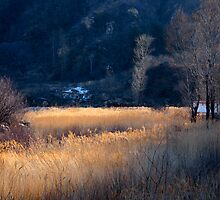 Reed Valley - Huairou, Beijing by Jue Wang