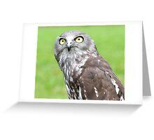 Looking Up - barking owl Greeting Card
