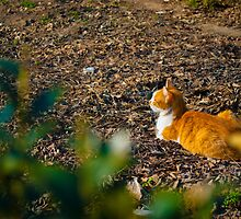 Cat on guard  by bogdan5844