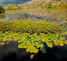 Water Lilys In Hebrides by C W MacGregor