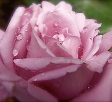 Rain Drops on my Petals. by Gabrielle  Hope