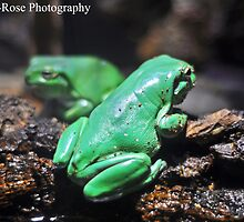 Green Frogs by Georgia Rose Smith