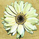 Yellow Gerbera - watercolour by PhotosByHealy