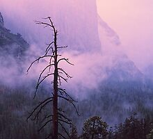 EL CAPITAN IN THE MIST by Chuck Wickham