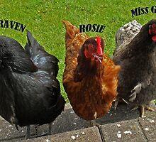 Ever heard of hen's teeth???... by sarnia2