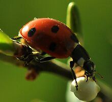 Ladybird by Russell Couch