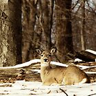 Deer in Woods in the Snow by Rebecca  Haegele