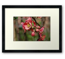 The beauty of Spring Framed Print