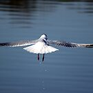 Just after take off  by larry flewers