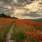 Poppies Sunset - South Downs Sussex by oindypoind