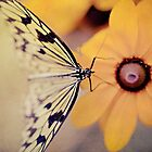 Happiness is like a butterfly by Isabelle Lafrance