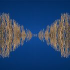 poplar reflection by wellman