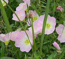 Evening Primrose by a Creek by Navigator
