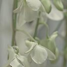 Orchid spray by Hege Nolan