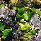 Emerald Moss, Tasmania by Jane McDougall
