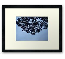 Jacaranda Sky Framed Print