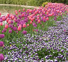 Tulips and Pansies by Gordon Taylor