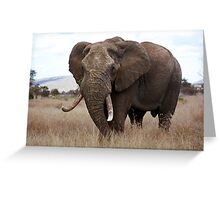 Loxodonta africana Greeting Card