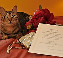 My Mommy Is Getting Married Today by eleanor p.  labrozzi