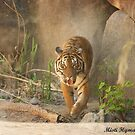 Tigerrrrrrrrrr by Misti Love