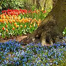 Woodland Planting of Spring Bulbs- Keukenhof Gardens by kkmarais