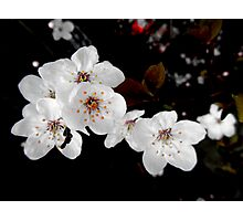Spring Time White Photographic Print