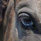 Blue Eyed Horse by venny
