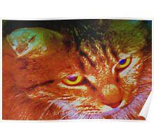 Persian tabby cat Poster