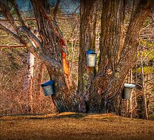 Pass the Maple Syrup by Monica M. Scanlan
