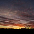 Honeycomb Sky by Mully410