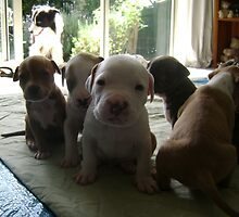Fostered Puppies by chrissy mitchell
