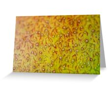 Mango Skin Closeup Greeting Card