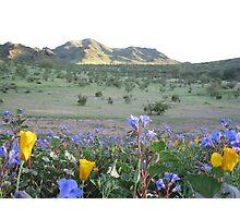 Phoenix Blossoms Photographic Print