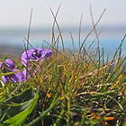 Seaside flowers by Melanie G