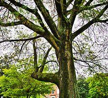 Mighty Oak by DBGuinn
