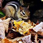 Autumn Chipmunk  by BonnieToll