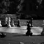 chess ? hobart, tasmania by tim buckley | bodhiimages