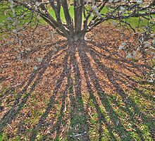 Spring Buds and Shadows by windelbo
