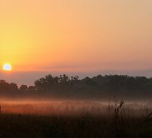 kissimmee prairie sunrise by cliffordc1