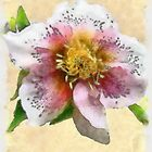 Watercolor Helleborus by DDLeach