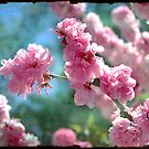 Spring is in the Air by Rozalia Toth